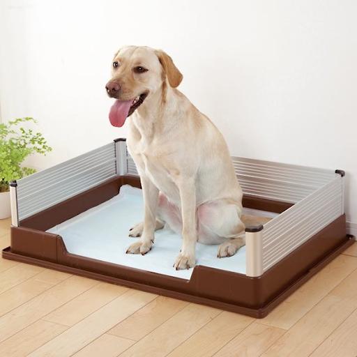 Khay vệ sinh cho chó loại nào tốt và tiện lợi nhất 2020